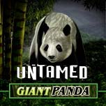 untamed-giant-panda